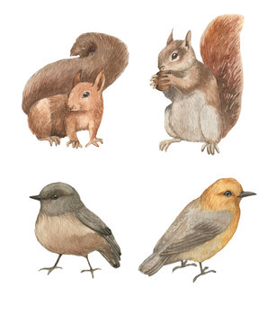 Hand drawn watercolor animals set. Cute squirrels and birds characters. Isolated animals