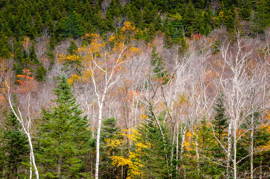 Leafless deciduous trees and pines in a mountain forest. Natural background.