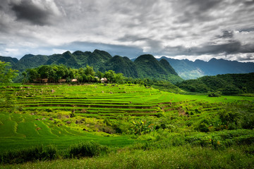 Foto auf Acrylglas Reisfelder Terraced green and yellow rice fields of Pu Luong, close to Mai Chau in Thanh Hoa province. Transition stage to harvest season in Pu Luong.