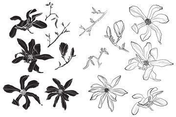 Set of isolated silhouette black white magnolia flower. Cute hand drawn flower illustration in white outline and black plane on white background.