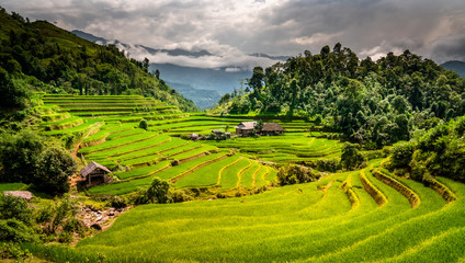 Garden Poster Rice fields Landscape of Vietnam, terraced rice fields of Hoang Su Phi district, Ha Giang province. Spectacular rice fields.