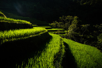 Poster Rice fields Landscape of Vietnam, terraced rice fields of Hoang Su Phi district, Ha Giang province. Spectacular rice fields.