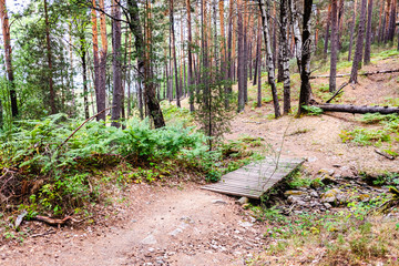 Trail through a forest of high conifers, ideal for walking in autumn and relaxing in nature.
