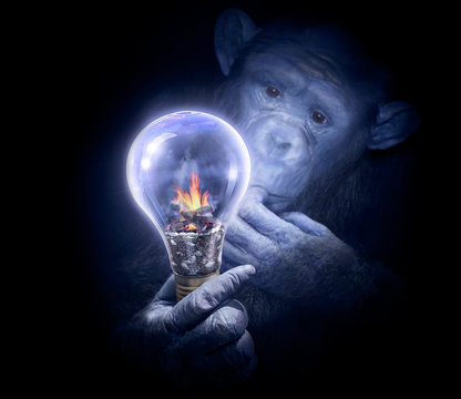 Pensive monkey observing a light bulb. Smart chimpanzee with intrigued look. Invention or solution search concept. Intelligent chimpanzee surching a solution. R&D or chalenge concept