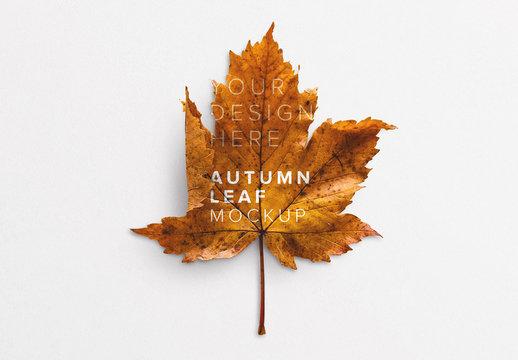 Autumn Leaf Mockup