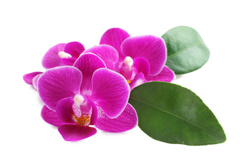 Tuinposter Orchidee Beautiful pink orchid flowers with green leaves on white background