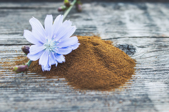 Blue chicory flower and a pile of instant chicory powder on an old wooden table. Chicory powder. The concept of healthy eating a drink.