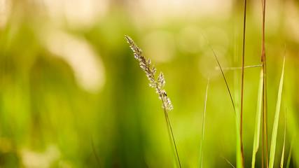 Light backdrop. Beautiful autumn nature. Autumn garden. Grass background. Green farm. Summer color. Abstract art.