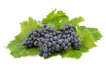 Dark blue grape bunch with leaves isolated on white background.