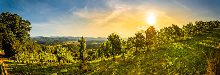 Photo sur Aluminium Vignoble Autumn panorama of Grape rows on vineyard in Austrian town Kitzeck im Sausal Leibnitz