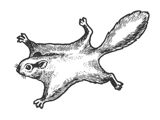 Flying squirrel animal sketch engraving vector illustration. Tee shirt apparel print design. Scratch board style imitation. Black and white hand drawn image.
