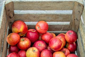 viele leckere reife Äpfel (Santana) in einer Holzkiste