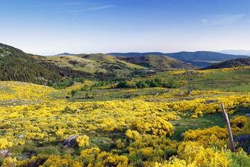 Photo sur Plexiglas Orange Lozère au printemps vue sur les montagnes par beau temps avec fleurs jaunes