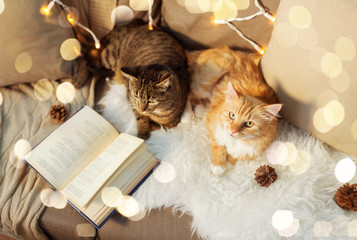 Fototapete - pets, christmas and hygge concept - two cats lying on sofa with book and sheepskin at home in winter
