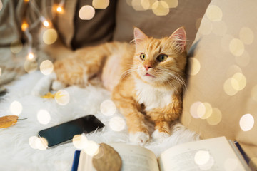 Fototapete - pets, hygge and domestic animal concept - red tabby cat lying on sofa with smartphone and book at home
