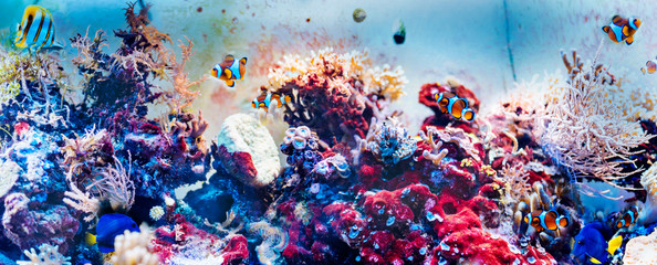 Poster Coral reefs Colorful underwater panorama with fish, corals and seaweed.