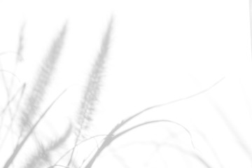 Overlay effect for photo. Gray shadows of the delicate grass on a white wall. Abstract neutral nature concept background. Space for text. Blurred, defocused.