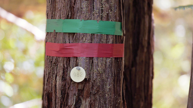 Trees with colored ribbons tied around their trunks to show they are available in Point Arena California