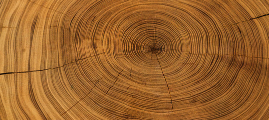 Poster Wood Old wooden oak tree cut surface. Detailed warm dark brown and orange tones of a felled tree trunk or stump. Rough organic texture of tree rings with close up of end grain.