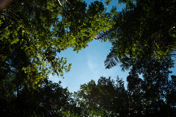 Bottom up view of blue sky framed by tree leaves and palm trees with white copy space