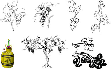 set of elements for grape theme: berries, leaves, stems in hand drawing style