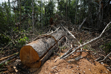 A view of a deforested area at the National Forest Bom Futuro in Rio Pardo