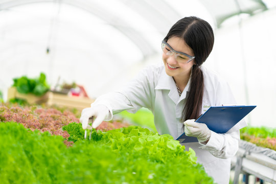 Young woman research green plants for hydroponics growing.
