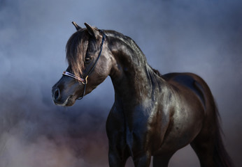 Wall Mural - Black American miniature horse in smoke.