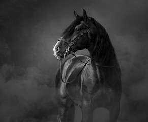 Spoed Foto op Canvas Paarden Black-and-White portrait of black Andalusian Horse in light smoke.
