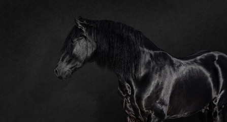 Fotoväggar - Black Pura Spanish stallion on dark background.