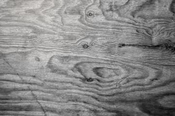 wooden texture of birch wood