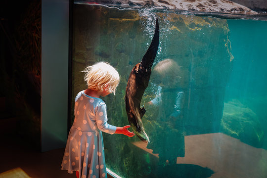 little girl looking at otter in large aquarium