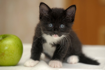 little black with white kitten and green apple
