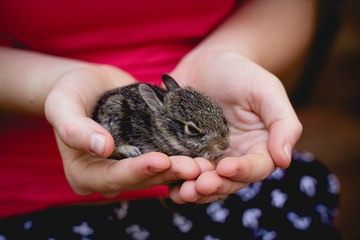Girl carefully holding a baby rabbit in her hands