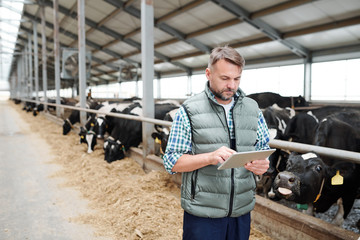 Mature male worker of contemporary animal farm using digital tablet