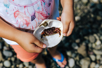 Girl holding baby crab in a shell at the ocean