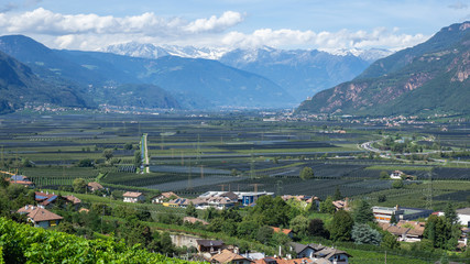 Foto auf Acrylglas Khaki Landscape of fruit of apple and vine plantations in Trentino Alto Adige, North Italy. Green landscape. Natural contest. Intensive cultivations and plantations