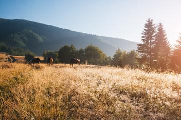 壁紙(ウォールミューラル) - Scenic image of mountain landscape in the sunlight. Locations Carpathian national park, Ukraine.