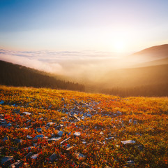 Wall Mural - Scenic image of misty valley. Locations Carpathian national park, Ukraine.