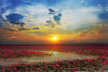 Udon Thani , picture of beautiful lotus flower field at the red lotus Panorama View at sunrise