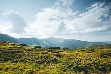 壁紙(ウォールミューラル) - Awesome alpine highlands sunny day. Location Carpathian national park, Ukraine, Europe.