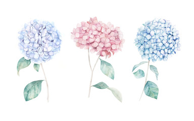 Watercolor hand drawn set. Flower hydrangea print. Botanical isolated design