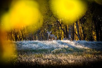 Foto op Canvas Meloen Rocky Mountain Arsenal Colorado
