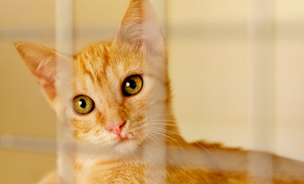 Ginger cat in a cage behind jail inside of animal shelter