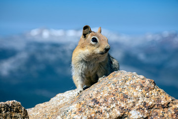 Chipmunk sits on a rock eyeing hikers eating snacks, waiting for crumbs to fall