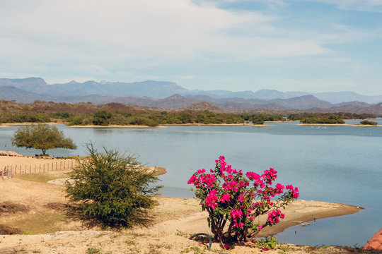 Flowers on a ridge overlooking Lake PIcachos in Sinaloa Mexico, with the Sierra Madre Mountains in the background
