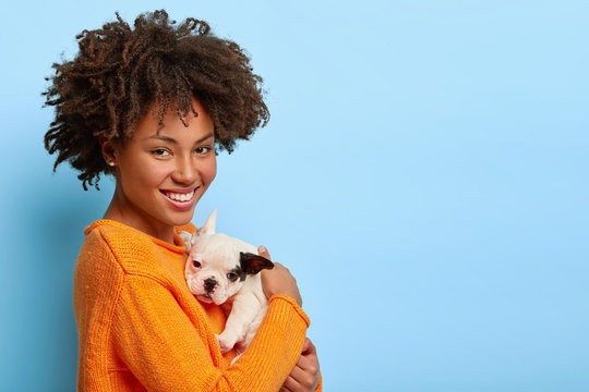 Beautiful African American woman stands sideways at camera, plays with small bulldog puppy at home, show love between owner and pet, isolated on blue background. Family, animals and relations