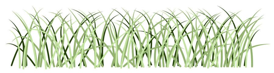 Tall Decorative Grass