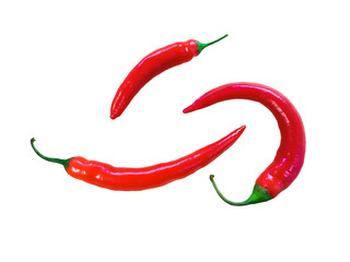 red chilli in white background