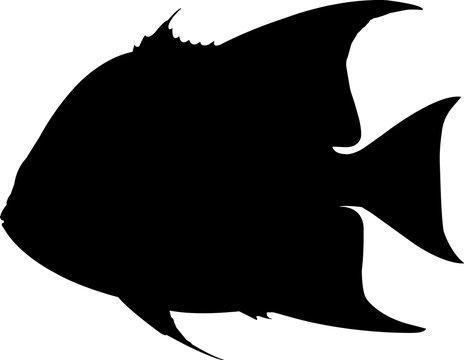 Atlantic Spadefish Fish Silhouette Vector